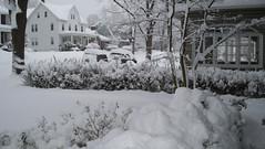 Feb 10.10 - Front Yard 3