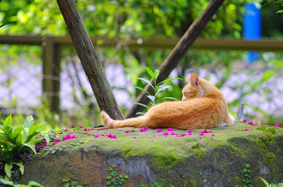 台北市立植物園半日遊