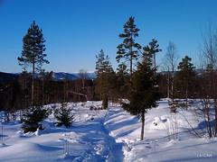 Winter forest. Htc Tattoo