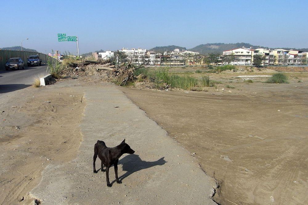 03 小黑狗.jpg