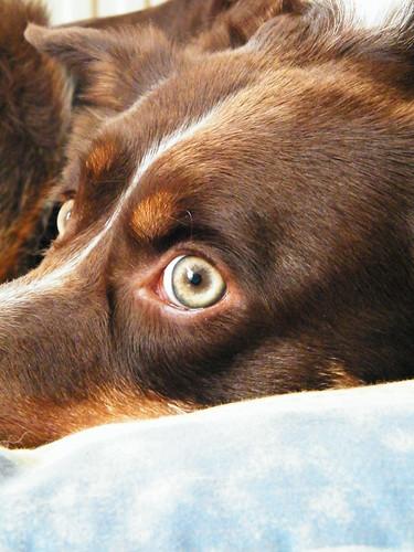 Charlie eye