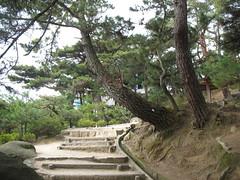 2482 The Path of Literature (mari-ten) Tags: tree nature japan stairs hiroshima sanyo 日本 2008 onomichi eastasia 広島県 青春18きっぷ 尾道市 200804 pathofliterature 文学のこみち 20080402 seishun18travel 山陽地方