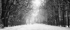 Winter Alley (Philipp Klinger Photography) Tags: park trees winter light shadow bw panorama woman sun white snow b
