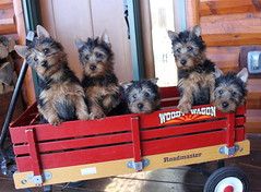 Gabby, Scout, Benny, Bea and Cody 1 (2)