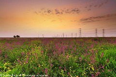 Kuwait Spring (A.alFoudry) Tags: pink sunset flower color tree green yellow clouds canon eos spring amazing purple mark towers north lavender reserve full frame electricity 5d kuwait fullframe sabah ef kuwaiti q8 abdullah  mark2 1635mm  || f28l  kuw  q80 q8city xnuzha alfoudry   canonef1635mmf28l abdullahalfoudry foudryphotocom  mark|| 5d|| canoneos5d|| mk|| canoneos5dmark||
