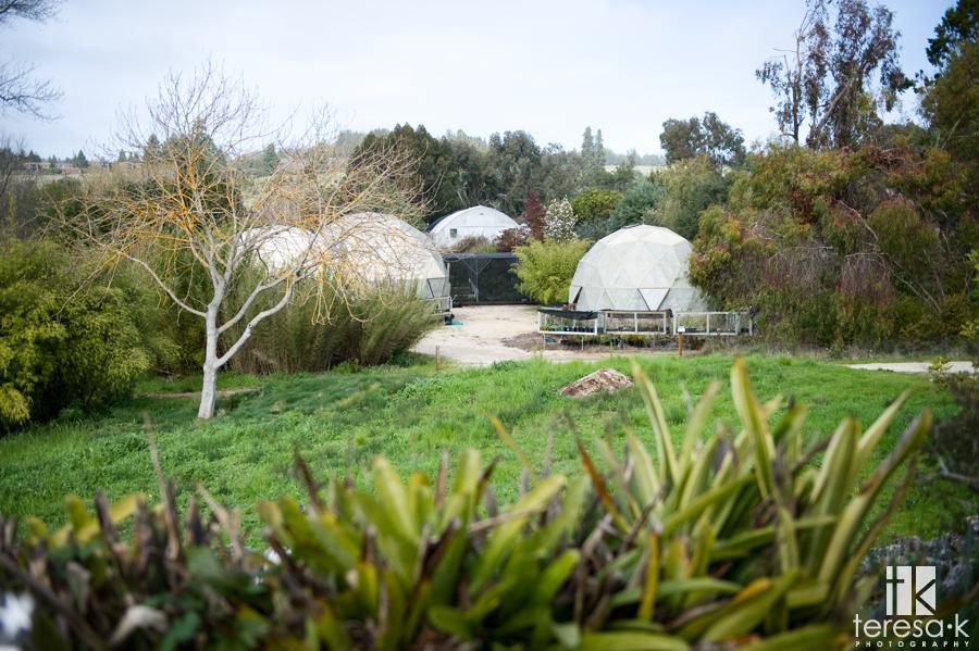 UCSC Arboretum, Teresa K photography, teresakphotography.com