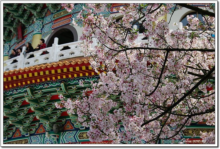 天元宮,櫻花 (9)