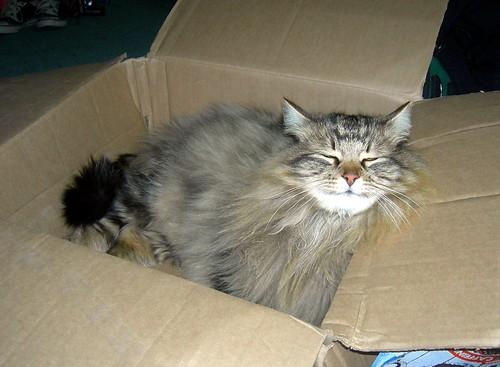 Box o' Rum Tum