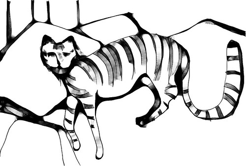 harmony cat