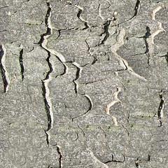 treebark-05 (Futurilla) Tags: macro outdoors photographs creativecommons texturing futurilla 3dtextures tilingtextures tilingtexture