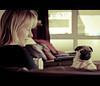 Yeah... Whatever! (Lightning Lee) Tags: dog pet puppy nikon sb600 pug nikkor strobe lightroom d300 strobes sb800 strobist 2485mmf284 flickrlovers