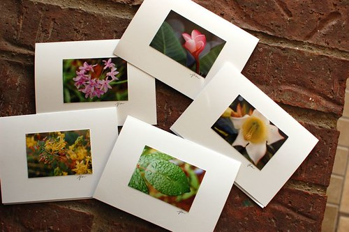 springtime flowers note cards