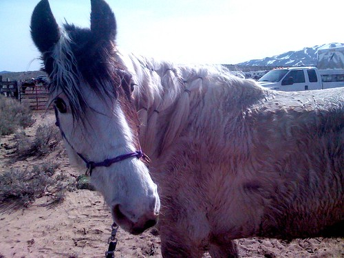 Mud horse!