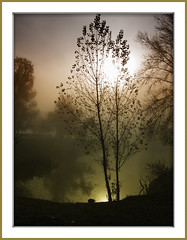 brume (@lain G) Tags: france silhouette nikon eau mare arbre iledefrance brouillard étang d90 seinemarne leuropepittoresque