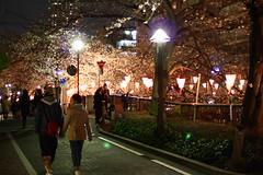 目黒川の桜 2010