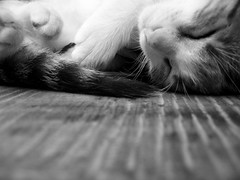 (wowitsstephen) Tags: wood bw cat table nose paw costarica tail grain challenge centralamerica lafortuna bigmomma flickrchallengegroup flickrchallengewinner friendlychallenges