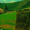 Vineyard (Osvaldo_Zoom) Tags: italy verde green rural landscape vineyard nikon hills marche macerata greengreengreen d80 montesangiusto agriscape
