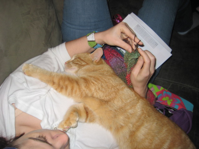 Knittin' with ma kitteh.