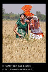 Visakhi (Raminder Pal Singh) Tags: india canon energy village wheat culture sing perform turban tradition punjab celebrate folkdance amritsar afc bhangra decorated wheatfield villagelife attire vaisakhi baisakhi virsa energetic dhol visakhi wheatfarm dholi 50d raminder jatt mendancing dancingmen canon50d folkartists punjabivirsa traditionalattire raminderpalsingh punjabiculture nachdapunjab boliyan punjabiyat shotoncanon menperformingfolkdancebhangra bhangraimage bhangrainafarm celebratingvisakhi celebratingbaisakhi dholtedagga kukkadanwala richculture