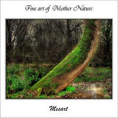 Fine art of Mother Nature (painter&draftsman) Tags: wood trees wild plant tree green art texture rural woodland countryside moss interesting soft growth bark swamp growing curve shape biology landschaft attached arbre baum autumnal verte bramble clinging underbrush undergrowth swampy tropism grun brambly fleursetpaysages