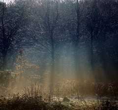 A Woodland Frost (Paul Sivyer) Tags: trees sunlight mist paul frost llanberis wildwales sivyer coedydoctor