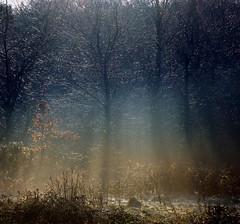 A Woodland Frost (Paul Sivyer) Tags: trees sunlight mist paul frost llanberis wildwales sivyer coedydoctor