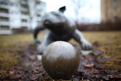 1838 The Ball Dog (Ulf Bodin) Tags: canoneos5dmarkii canonef24mmf14liiusm bollhund sonjapetersson