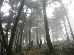 Foggy (ndimensi) Tags: walking hiking climbing evia  dirfi centralevia hikingingreece olympusfe4000x920x925 20100418 elatias  walkingingreece