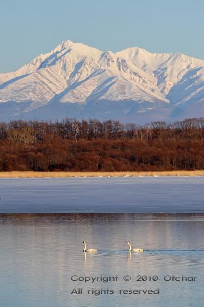 Mt. Shari and Swans