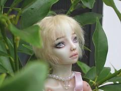IMG_1262 (OrendaDoll) Tags: bride doll tess porcelain enchanted enchanteddoll