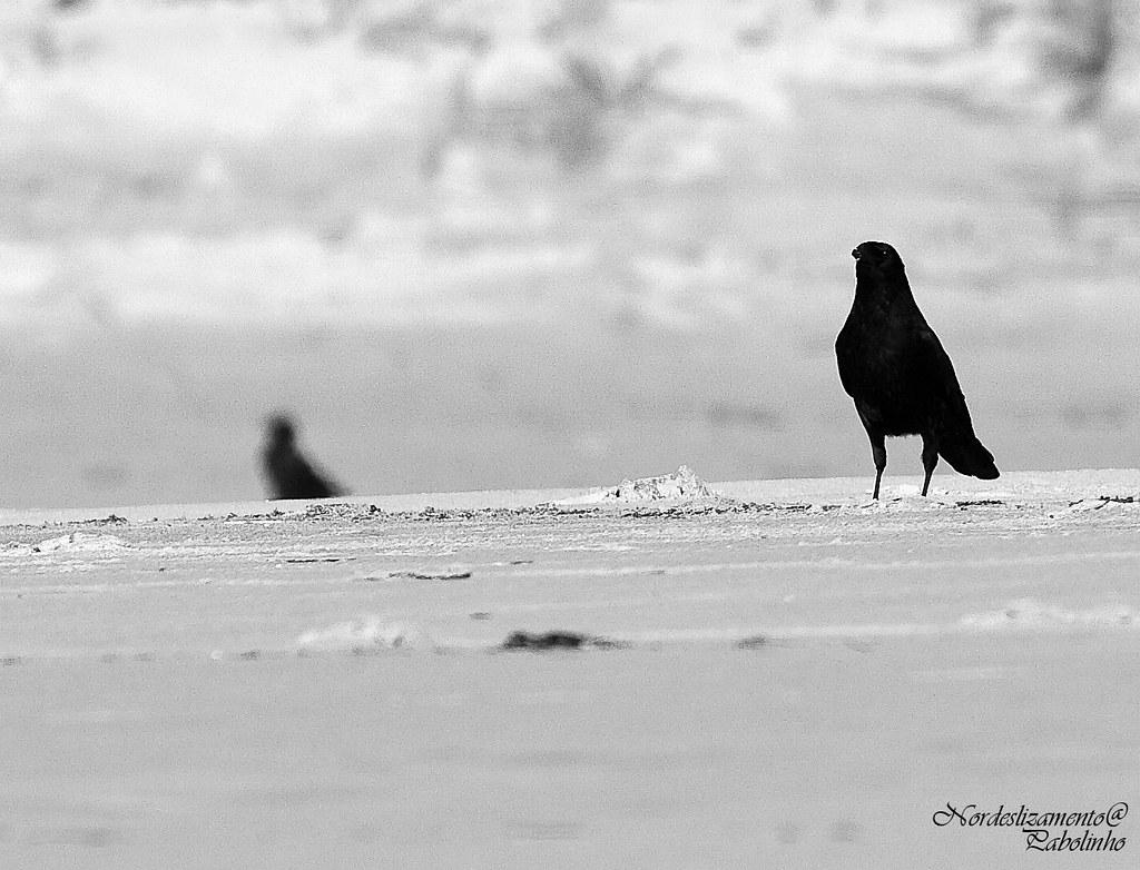 Cria cuervos...