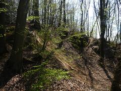 Le bois de l'homme mort (The Gromitflash) Tags: life nature fort vie jouyenjosas deadmanswood boisdelhommemort