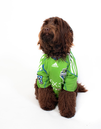 Ewok: Sounders Fan