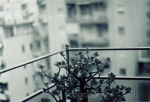 pianta sotto la pioggia