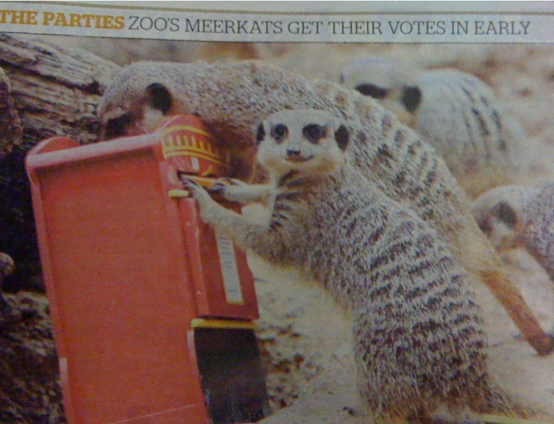 Meerkat image from Evening Standard