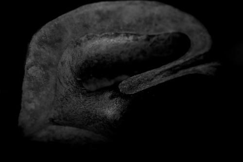 Black Wlanut Study 1
