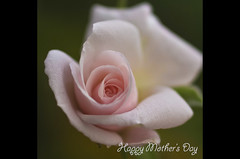 Happy Mother's Day =) (Lenareh) Tags: flower rose lopez mothersday quezon happymothersday lenarehsgarden