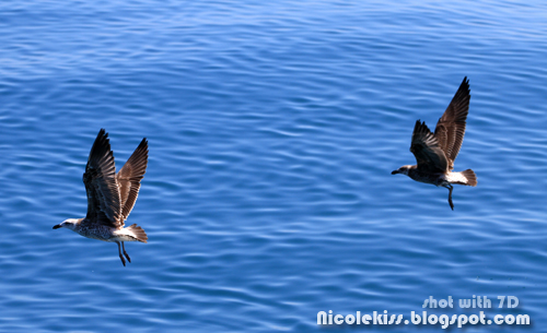 duo flight