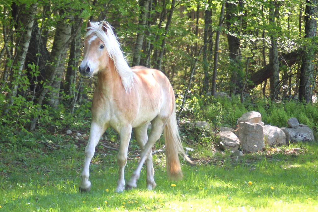 horses 252x