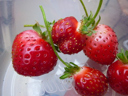 sweet tangy garden strawberries