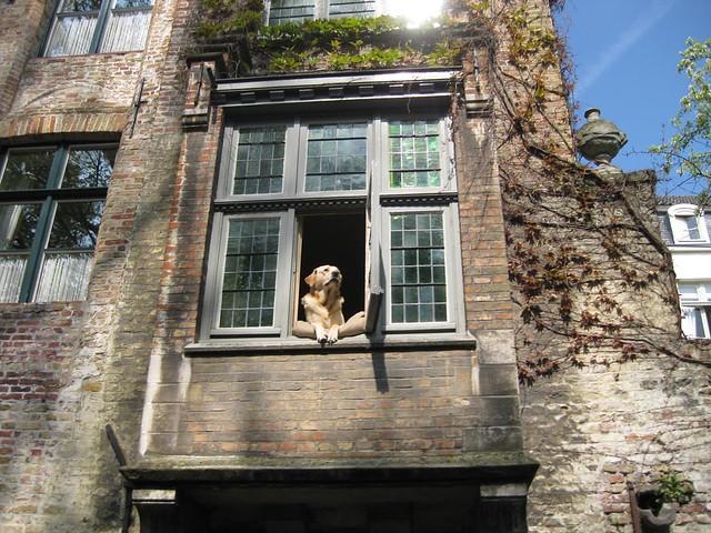 luxury dog, Bruges