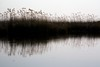 20090902 Okavango - Moremi 186 (blogmulo) Tags: africa travel reflection nature water rio canon river landscape agua wildlife junco reserve delta paisaje viajes rush reflejo botswana moremi okavango canon450d blogmulo