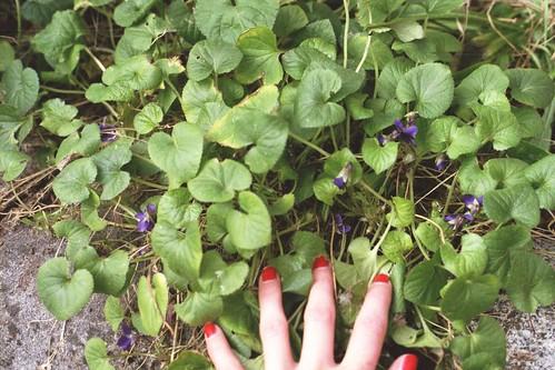 hiding violets