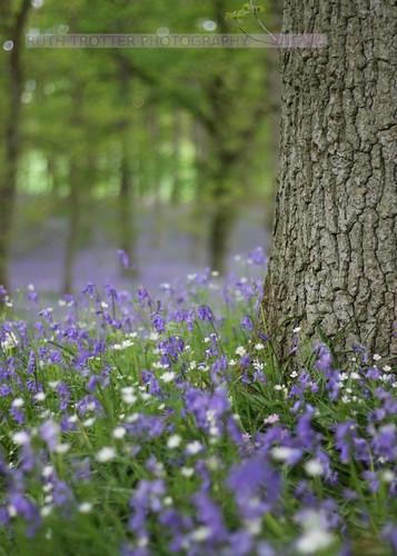 Kinclaven Woods