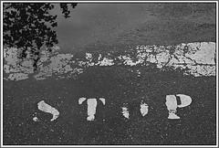 4 - 27 mai 2010 Maisons-Alfort Une petite promenade aprs la pluie... Rue Busteau (melina1965) Tags: blackandwhite bw reflection sol water reflections nikon eau ledefrance noiretblanc pavement may mai reflet reflets 2010 valdemarne sols maisonsalfort d80 photoscape checkoutmynewpics leagueofwomenphotographers foto umbralaward norulesphoto