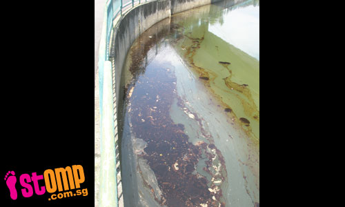 Even the canals at East Coast and Singapore Expo are polluted by oil now