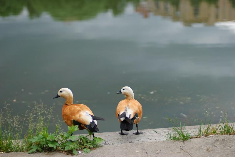 Duck Tales #2