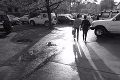 Shadows after rain.
