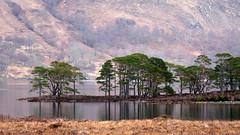 Loch Maree (Boobook48) Tags: uk lake landscape scotland highlands lochmaree pinussylvestris scotspine