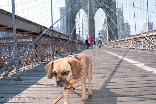 RYALE_Brooklyn_Bridge-15